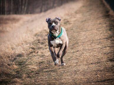 Nawet 5 tys. złotych grzywny dla właściciela psa. Nowe przepisy weszły w...