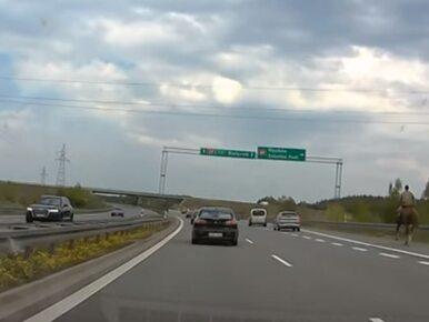 """""""Ułan na S8"""" zadziwił kierowców. Do sieci trafiło nagranie"""