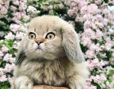 Jak wyglądałyby inne zwierzęta z kocim pyszczkiem? Te zdjęcia rozbawią...