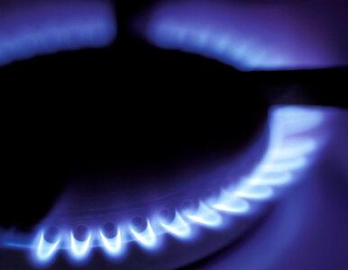Janukowycz zezwolił na wznowienie dostaw gazu do Polski