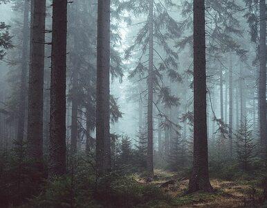 77-letni cukrzyk stracił przytomność w gęstym lesie. Zorganizowano...