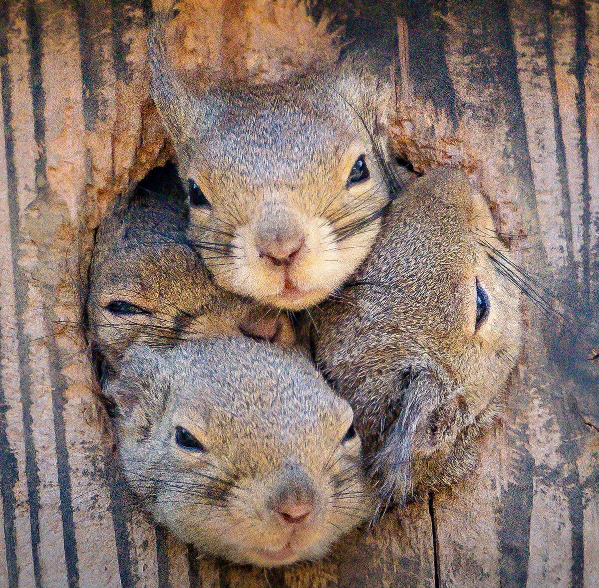 Zabawne zdjęcia ciekawskich wiewiórek wTokio