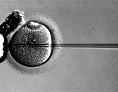 Tusk: nie chcę by z in vitro stało się to co z aborcją