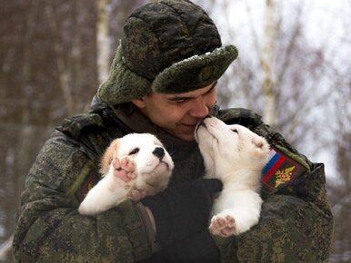 Rosyjski MON składa osobliwe życzenia. Pokazano rozkoszne szczeniaki...