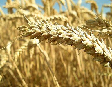 Rolnicy: nie chcemy zapomóg. Wróćmy do obowiązkowych ubezpieczeń