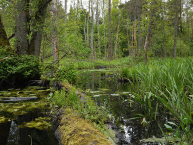 Minister Kowalczyk do KE: Nie prowadzimy gospodarki leśnej w Puszczy...