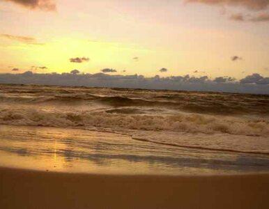 Sinice w Zatoce Gdańskiej. Zamknięte kąpieliska w 12 miejscach
