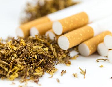 Niebawem ważna zmiana dla palaczy. Obejmie nawet 9 mln Polaków