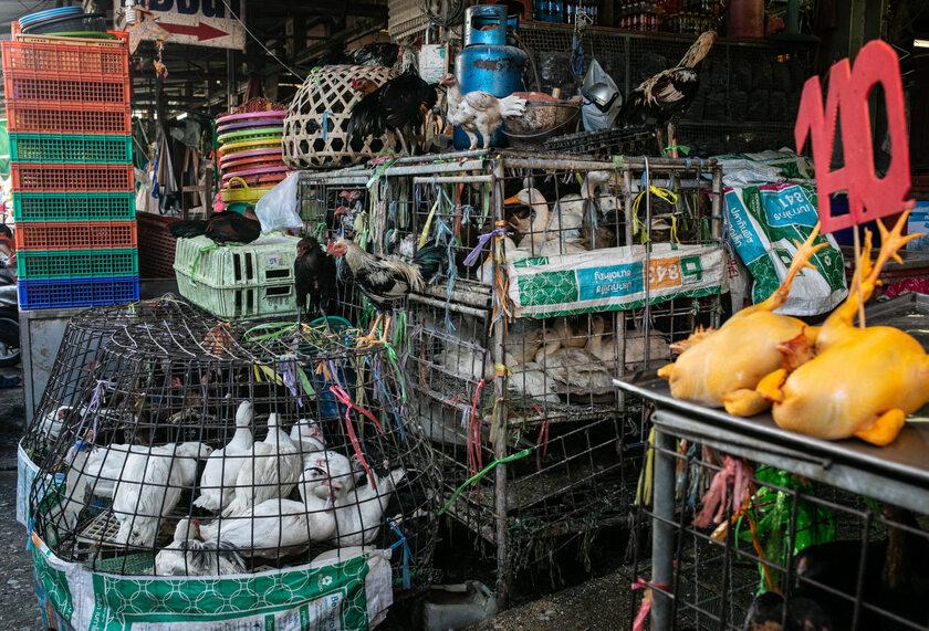 Targ żywych zwierząt Chatuchak w Tajlandii