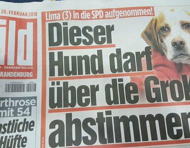 Niemieccy dziennikarze zarejestrowali psa i kota jako członków SPD....