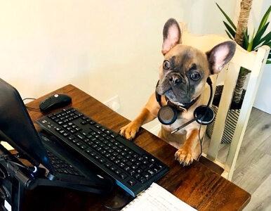 Pracujesz zdalnie i towarzyszy ci pies? Te zdjęcia pokazują, jak to może...