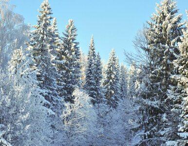 Hiszpania: pierwszy raz od 1995 r pada... śnieg