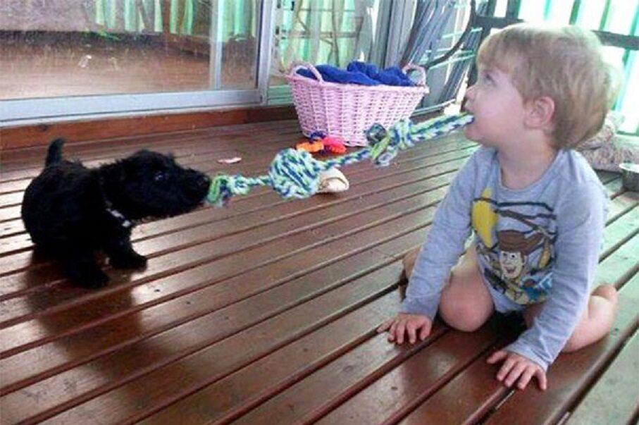 Pies zostawiony sam na sam z dziećmi