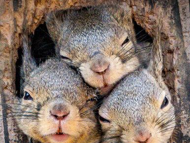 Ciekawskie wiewiórki dały popis. Te fotografie rozczulą chyba każdego