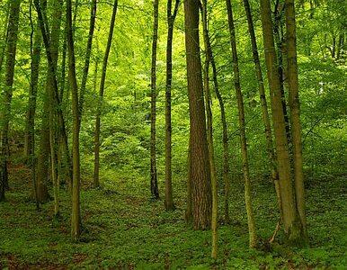 W ciągu ostatnich sześciu lat w stolicy wycięto 147 tys. drzew
