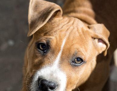 USA. Polak torturował psa, zwierzę uśpiono. 37-latek będzie deportowany