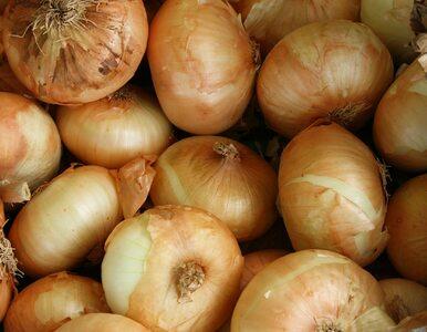 Jak prawidłowo przechowywać cebulę? Te błędy popełnia większość z nas