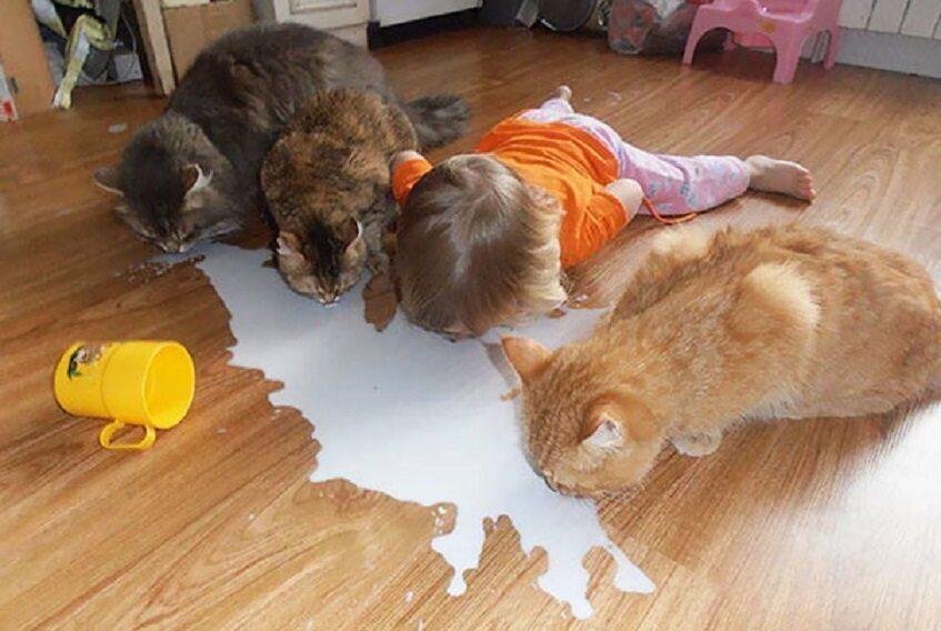 Koty zostawione sam na sam z dziećmi