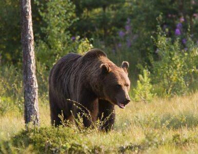 Mężczyzny w Bieszczadach nie zabił niedźwiedź. To morderstwo?