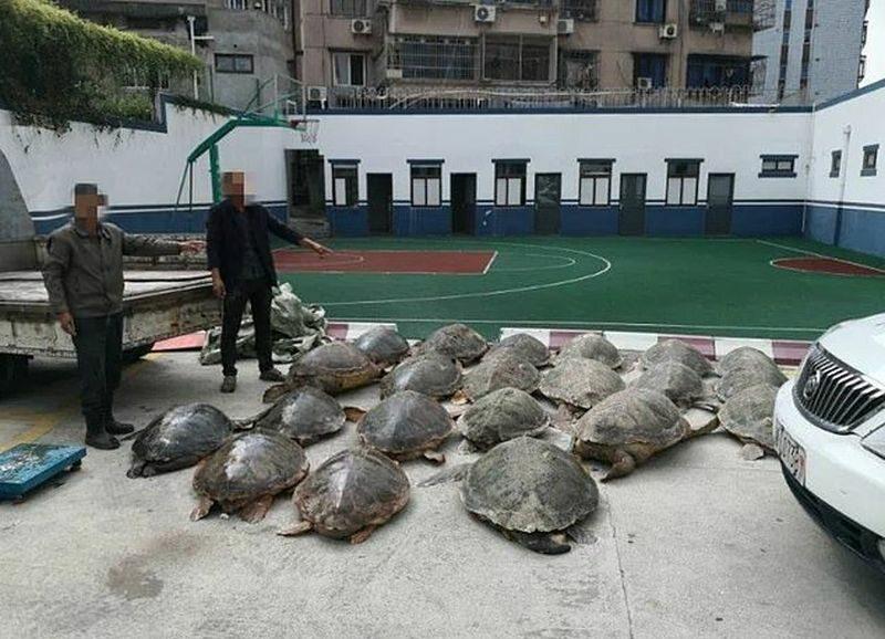 Żółwie przemycane koło Zhoushan