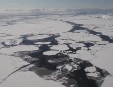 Antarktyda... porasta lodem!