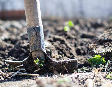 Praca w ogrodzie skuteczna jak ćwiczenia na siłowni?