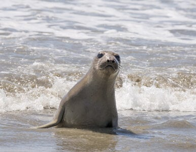 """Turyści atakują foki w Gdyni. """"Ludzie rzucają w nie kawałkiem drewna,..."""