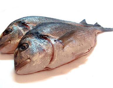 """Kolejny skandal z żywnością? Możliwe """"odświeżanie ryb"""" w Lublinie"""