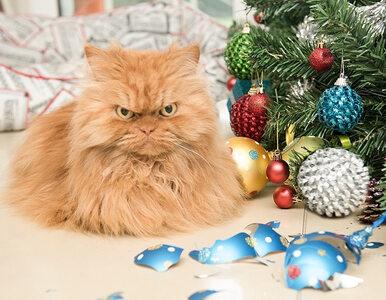 Strach się bać? Spojrzenie tego kota przypomina wzrok bazyliszka